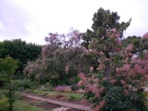 pretty trees!