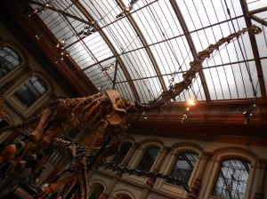Dinosaur skeleton at Berlin natural history museum